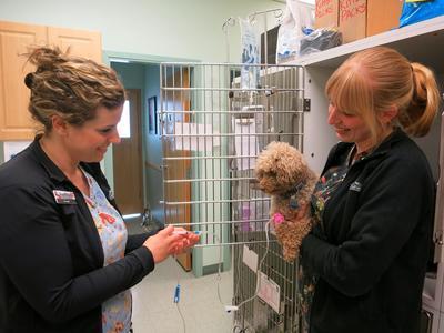 Foothills Animal Hospital, 34 Southridge Drive #6, Okotoks