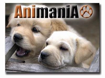 Animania Veterinary Hospital, 22 Pine Road (corner Richard