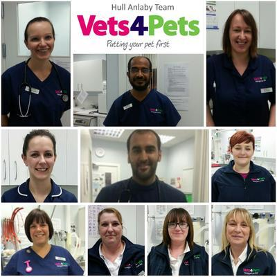 Hull Anlaby Vets4pets Inside Pets At Home Anlaby Reviews And Appointments Topvet