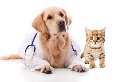 Image result for northwest animal hospital boise images