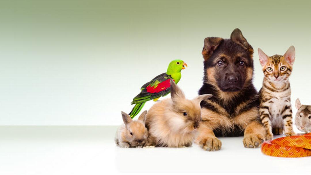 картинки животных для визиток мессенджерах