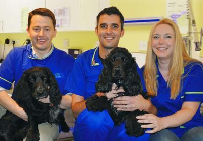 Ilford Companion Care Inside Pets At Home Ilford Reviews And Appointments Topvet